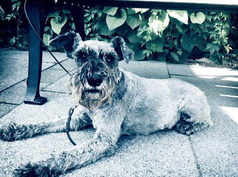 blog_stockholm_swedish_dog